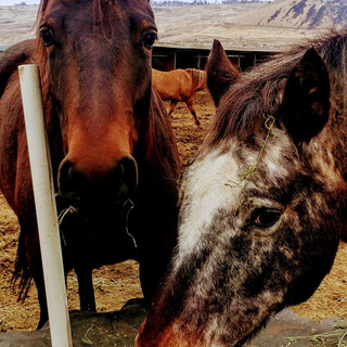 Missoula (L) and her Mother, Shasta