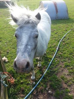 Pony - Gracey