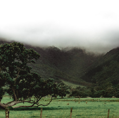 Fletcher Bay, New Zealand