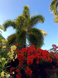Gardens at the Inn at San Pancho, Nayarit, Mexico