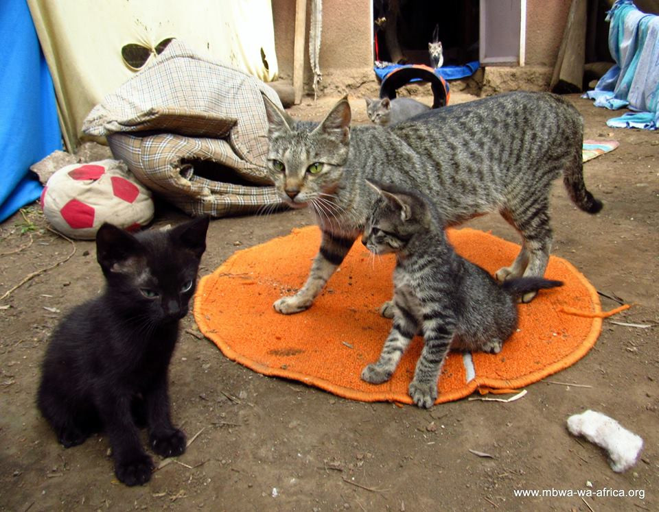 Photo 2. Inidira and her kitties-she had 5 while living at a restaurant, relying on handouts