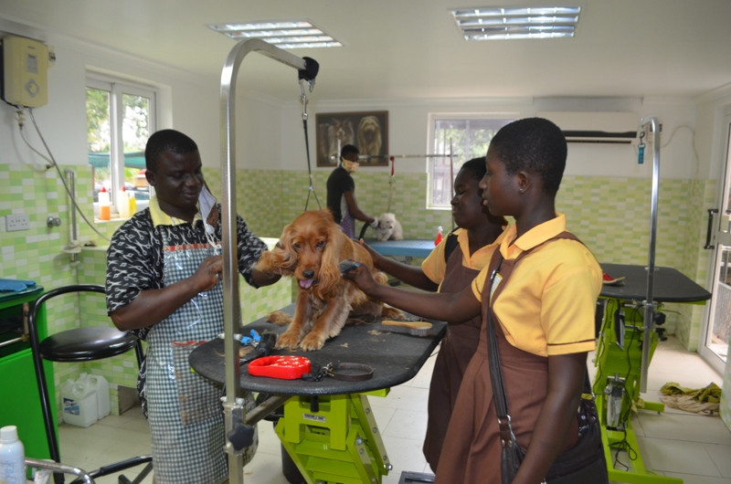 The 1st time these students have seen a dog being groomed