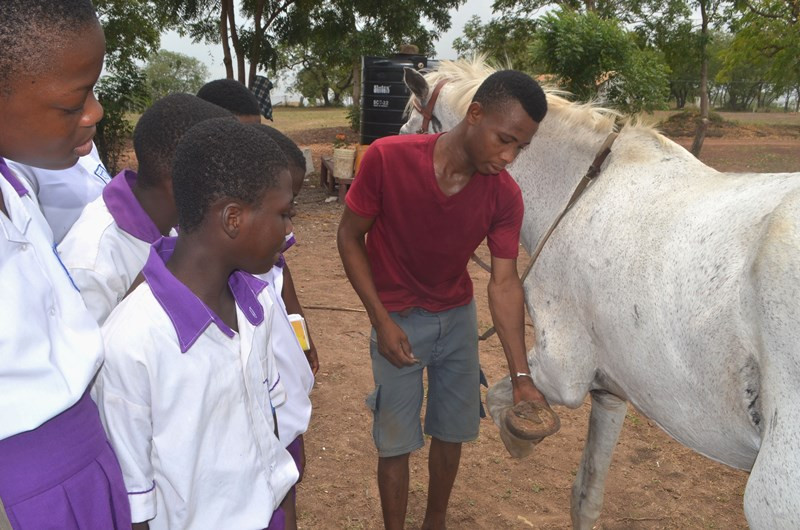 Learning about good care of horses