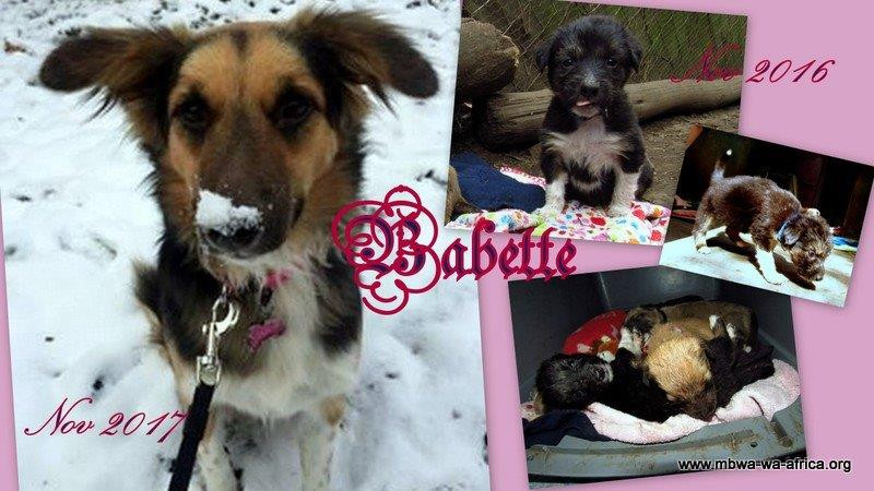Babette from arrival at MwA to life in snowy Canada
