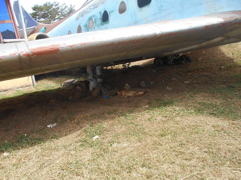 Nora sleeping under an old plane at Aero Beach, Entebbe