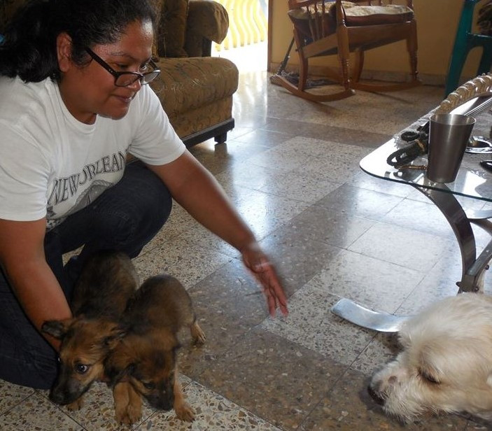 Two puppies from the HHHH sanctuary get a home