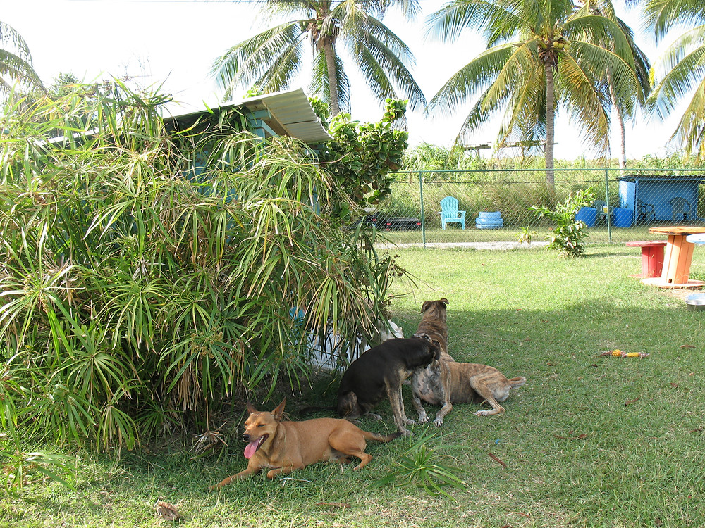 Dogs resting after play time