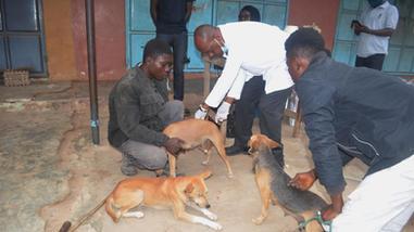 rabies clinic Sept at Dome Konka-2.JPG