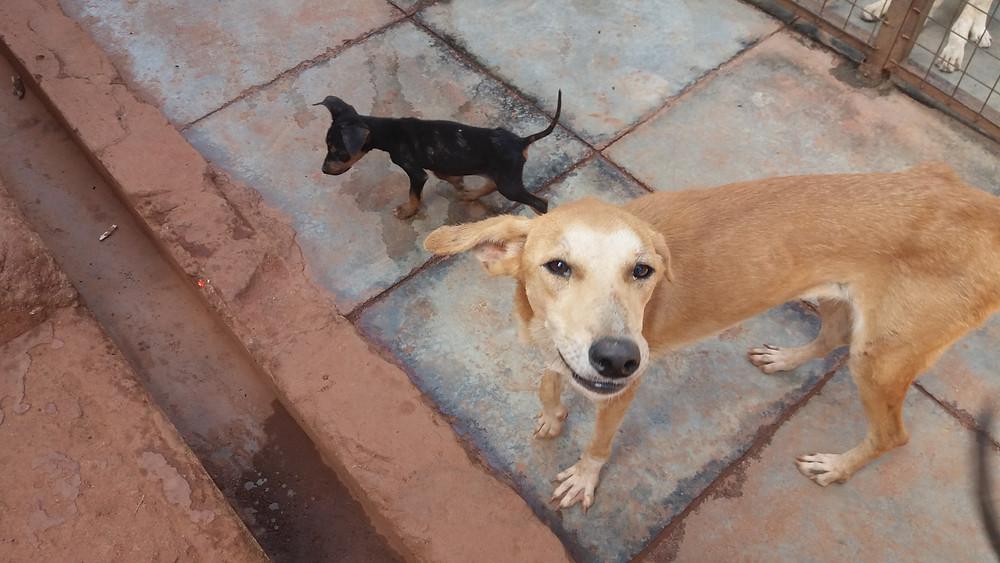 USPCA happy dog and puppy