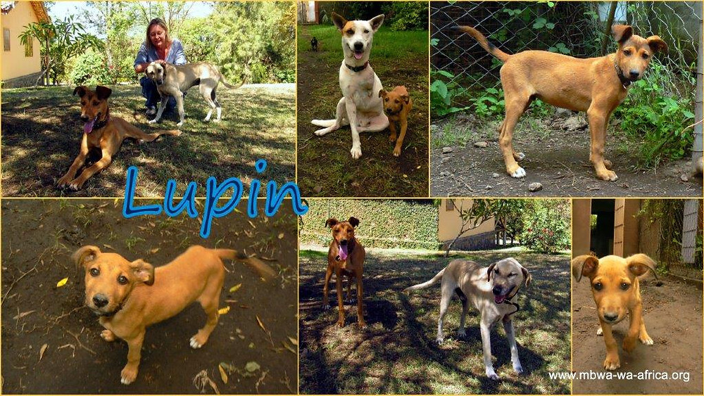 Photo 4. Lupin-before/after
