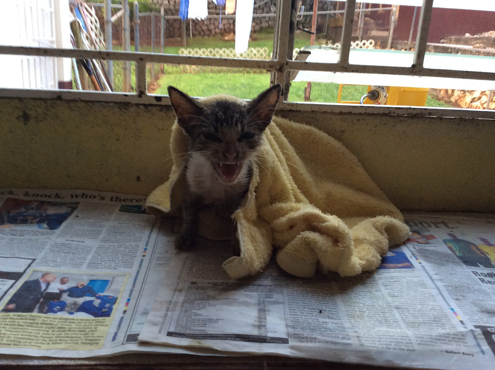 Same kitty at the KCAW kennels, after a bath
