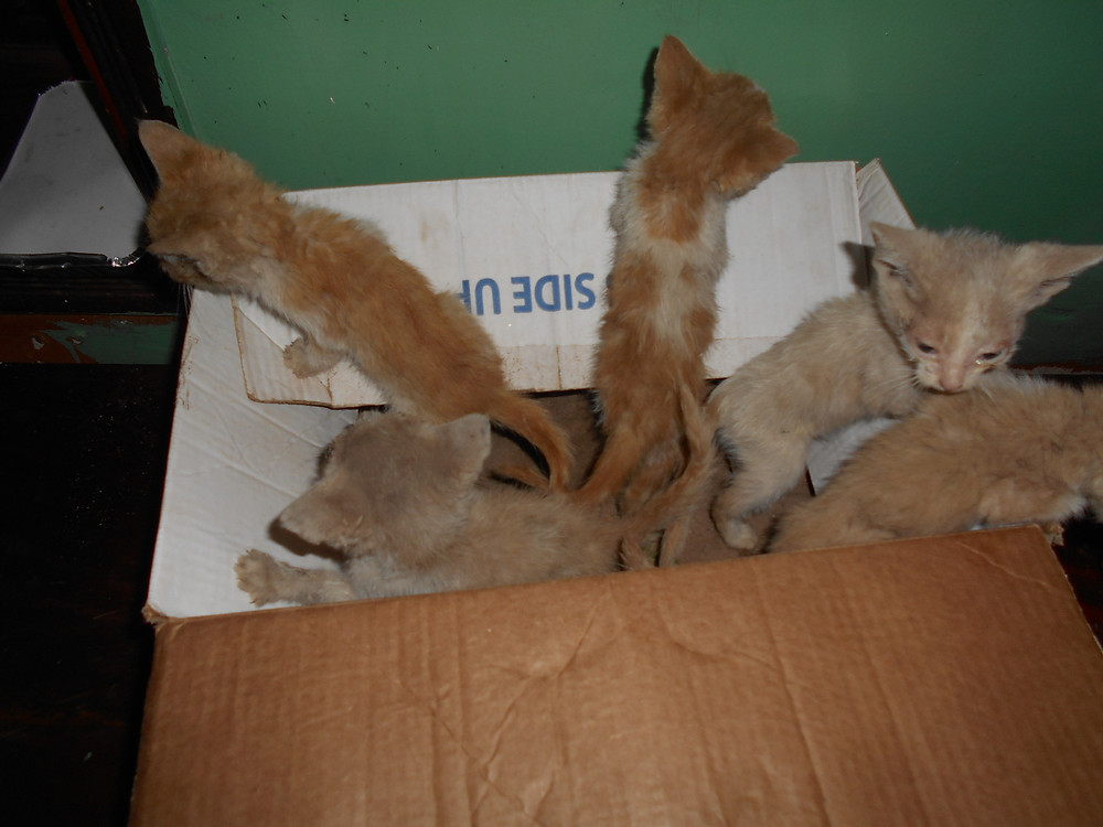 5 kitties rescued from a busy road-shots and food thanks to AKI donors
