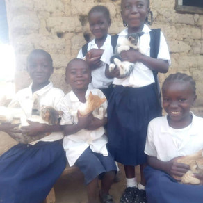 Liberia Animal Welfare & Conservation Society-Cat Awareness Day