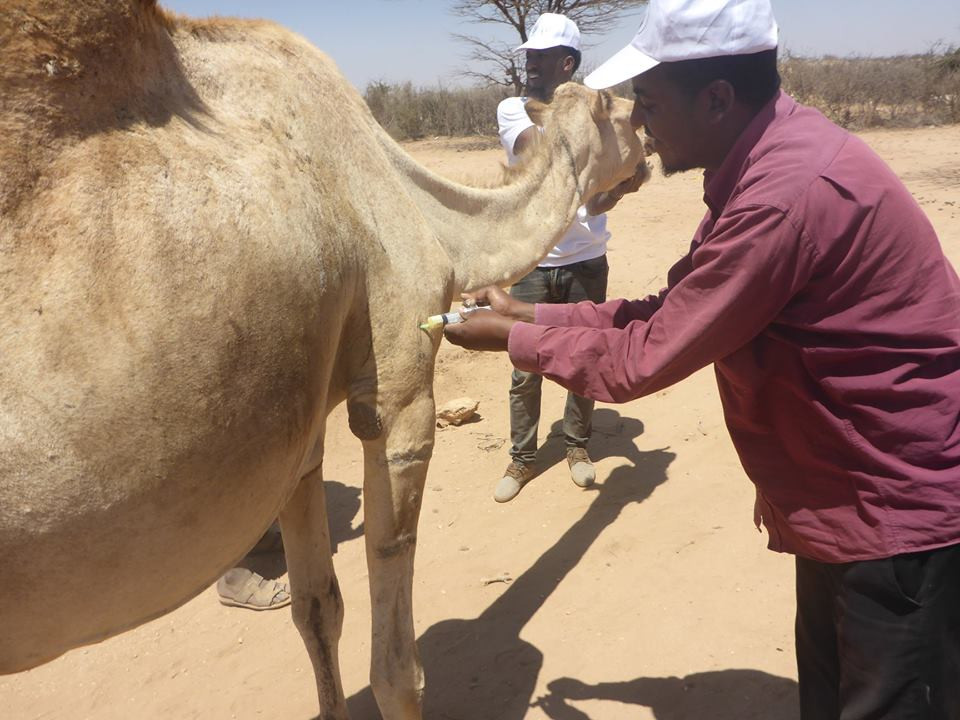 The SAWS Mobile Clinic treated 10 camels