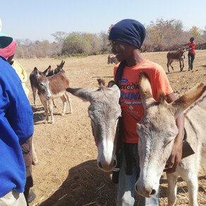 Sibanye Trust meets the needs of animals in Lupane district, Zimbabwe