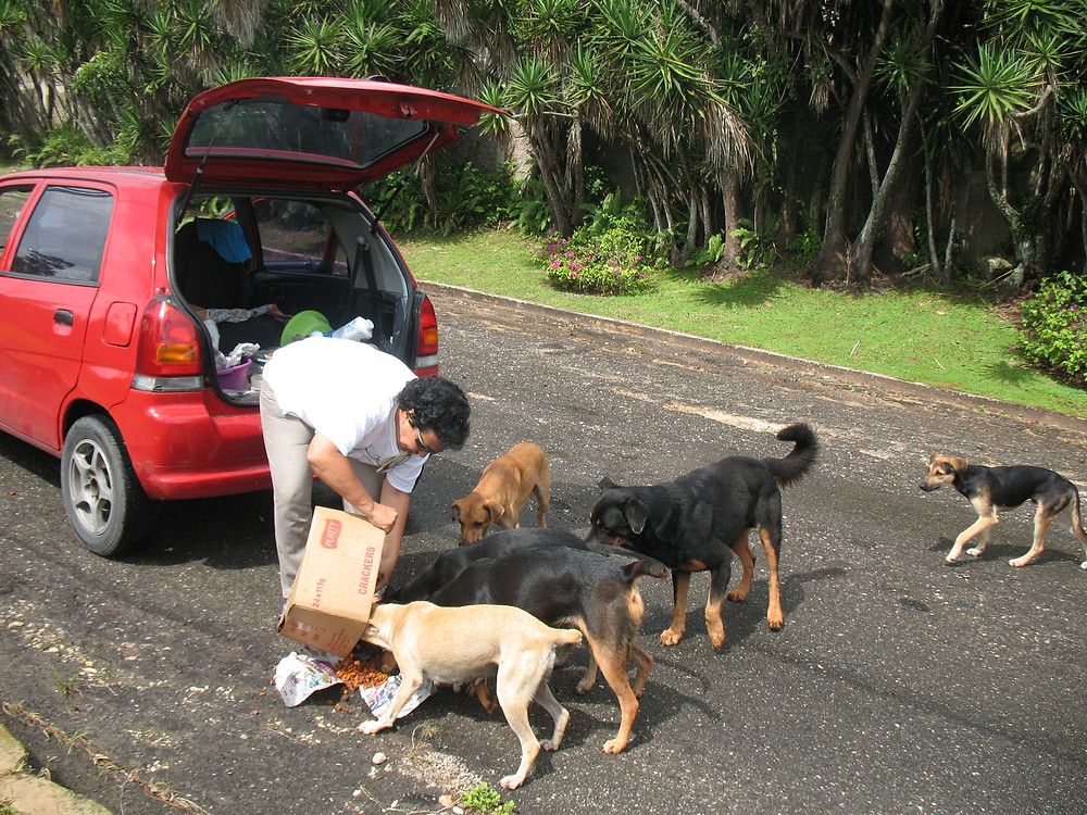 Day 1, we feed a large group of dogs