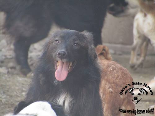 Merlin still at Sava's 4 years after rescue!