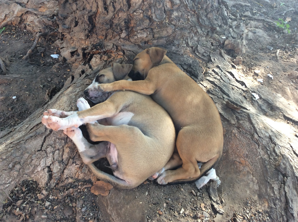 2 puppies live at a school