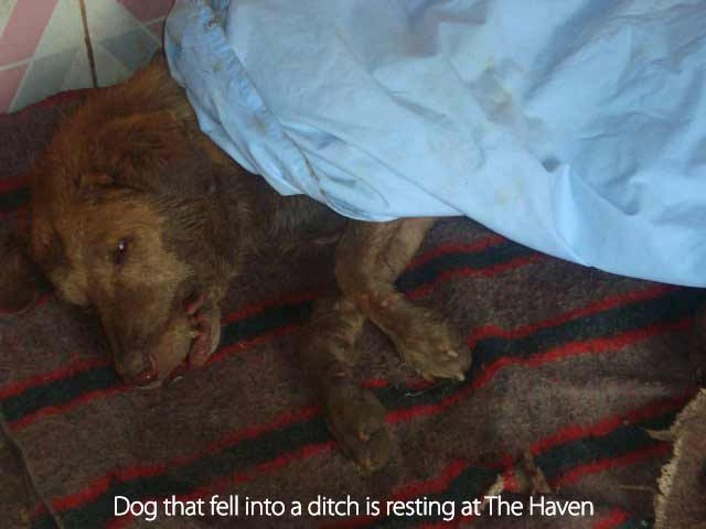 At The Haven, the dog recoverd