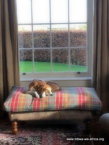 Rosie at home in Ireland