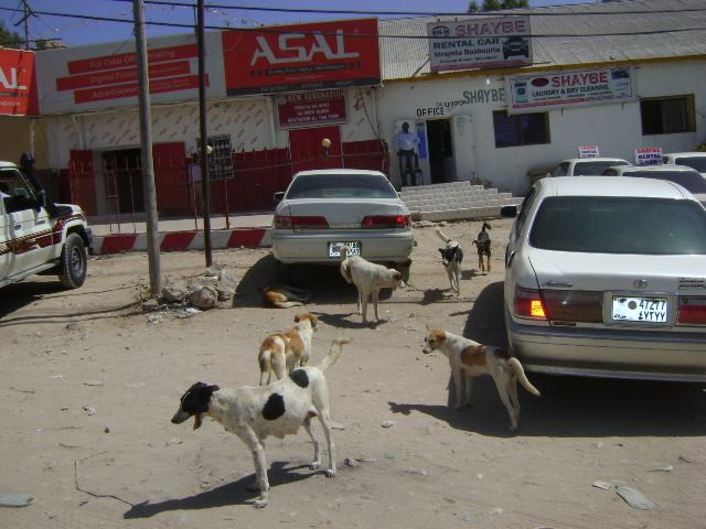 Dogs at a market in Hargeisa
