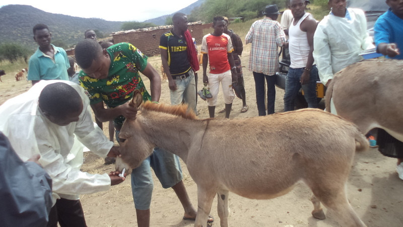 Donkey Outreach Clinics funded by AKI donors