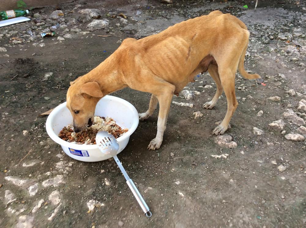 Starving mummy dog, starving no longer