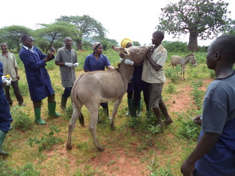 Donkey clinic