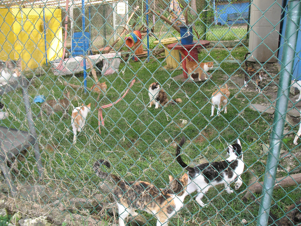 Cats at the Hope Sanctuary Cattery