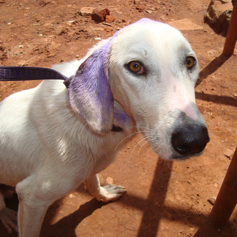 AKI Donors to the Rescue (Recoveries & Re-homes) at the Uganda SPCA