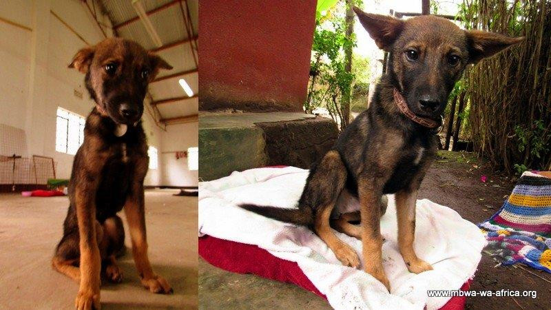 Herr Schmidt is quickly becoming happier and healthier at the MwA shelter