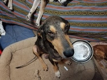 Bartolo 1 month after rescue
