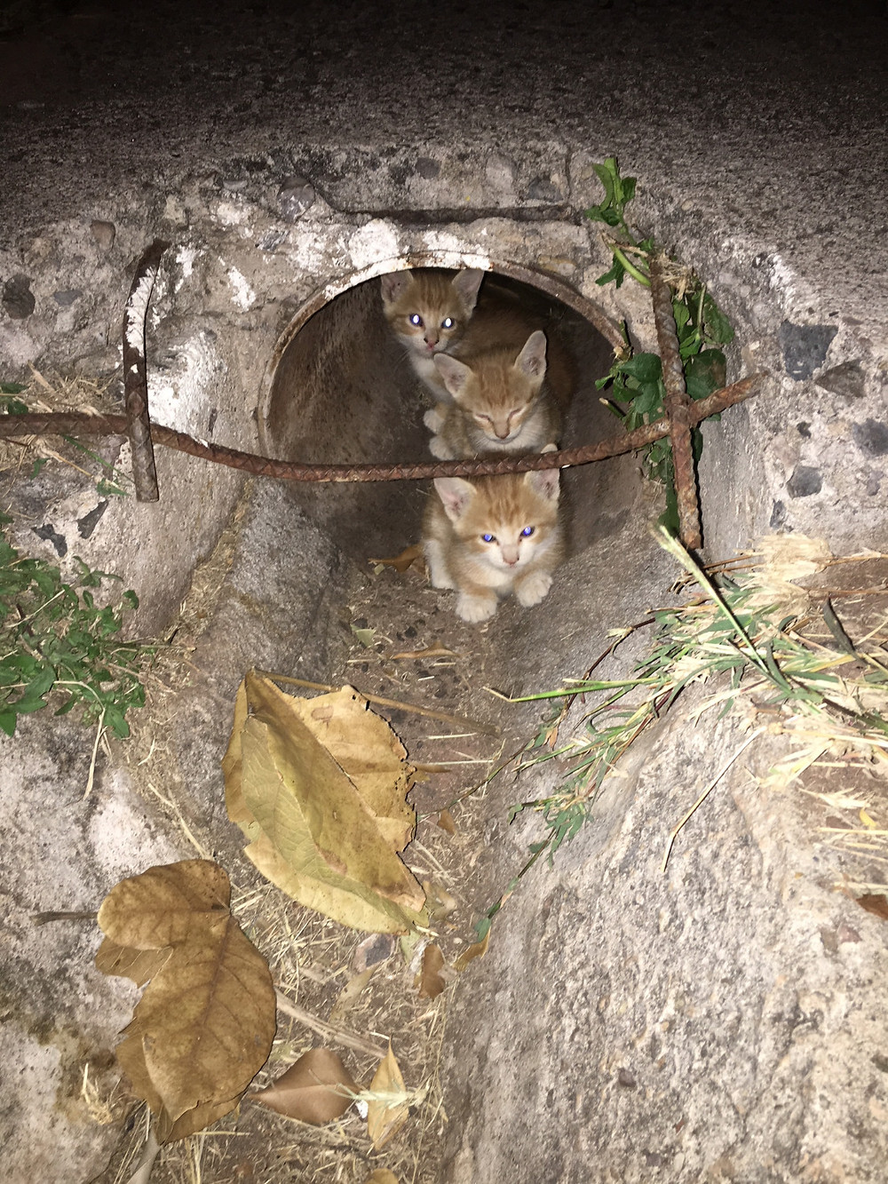 3 of Olive's kitties-Leanne wasn't able to capture them before she departed the base