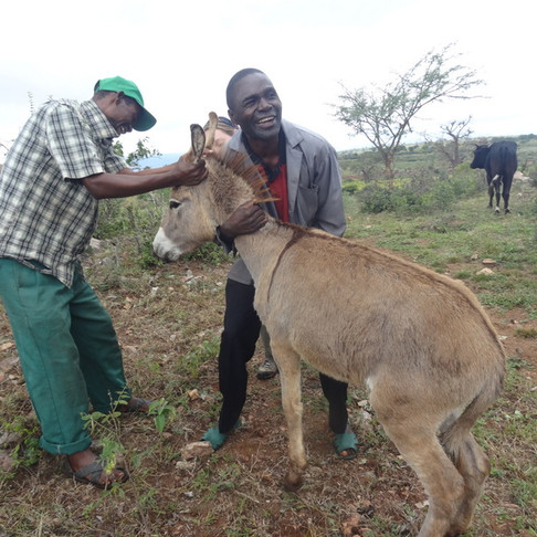 AKI Support to Tanzania Animal Welfare Society During the 1st Half of 2017
