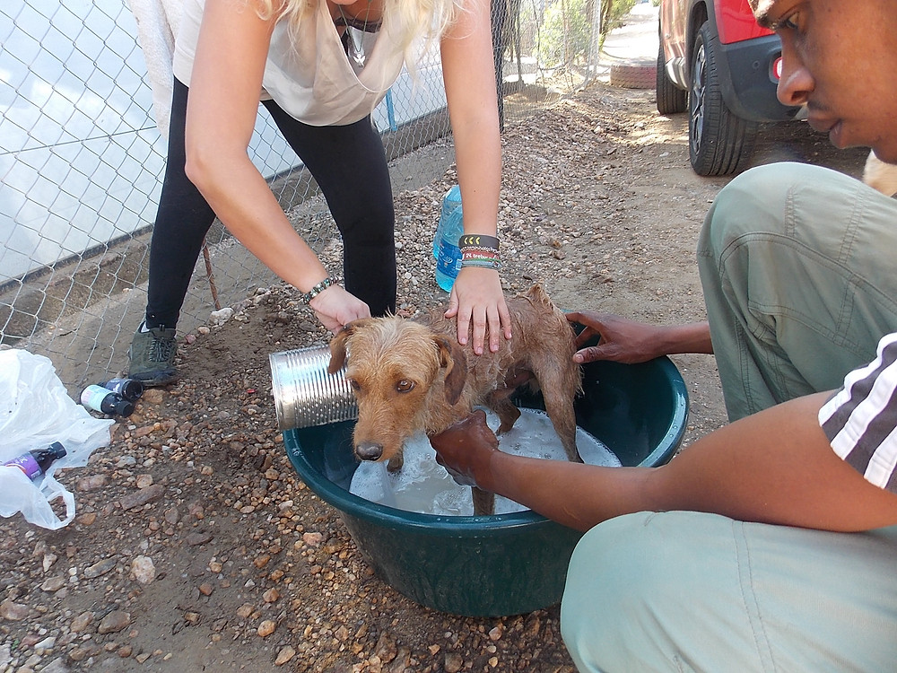 Katutura project: dog dipping to get rid of external parasites