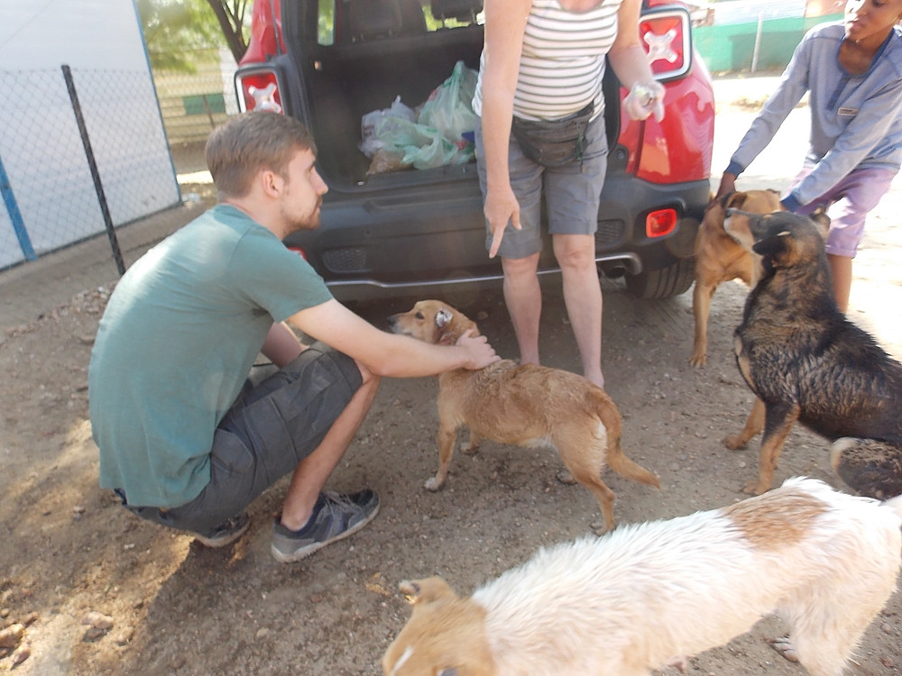 Oct 6: dogs line up for a check up, then comes dipping, and they go home with a bag of dog food