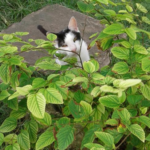 Hope Sanctuary kitties are parasite-free thanks to AKI donors!