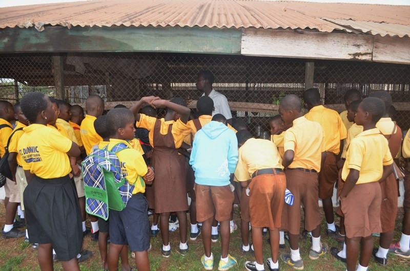 Students learn about good animal husbandry
