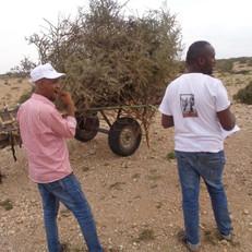 SAWS at work helping donkeys