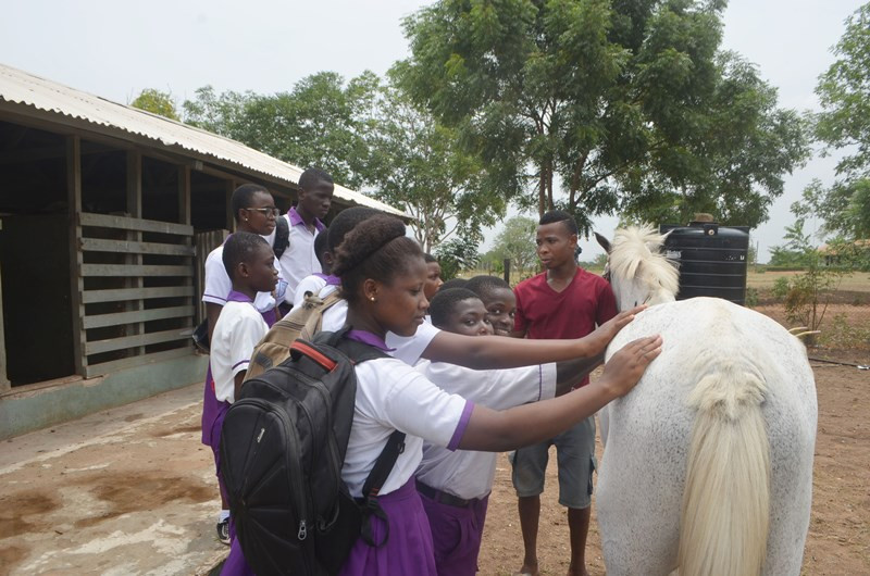 The 1st time touching a horse!