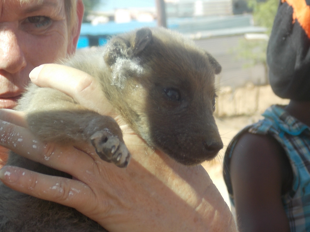 February visit-thanks to Erika's team, this puppy got the care he needed
