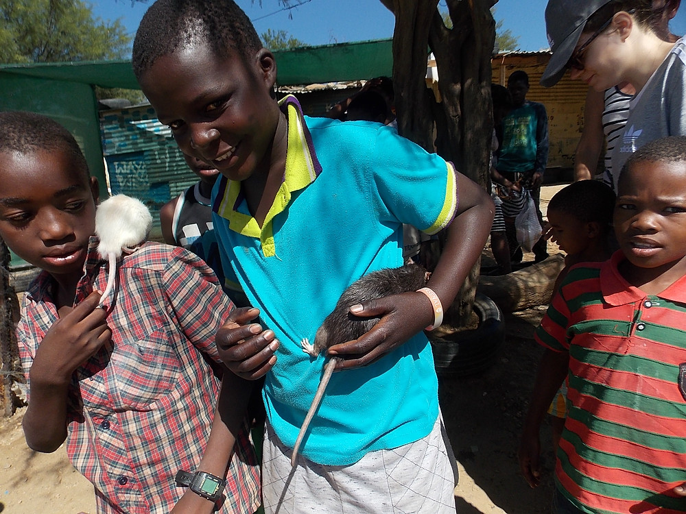 2 pet rats were brought to feeding day in Katutura!
