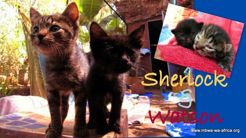 Sherlock and Watson go to a forever home together!