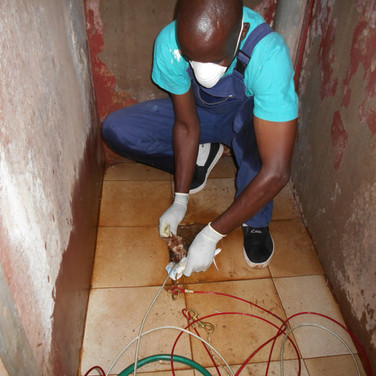 2 kitties rescued from a pit latrine