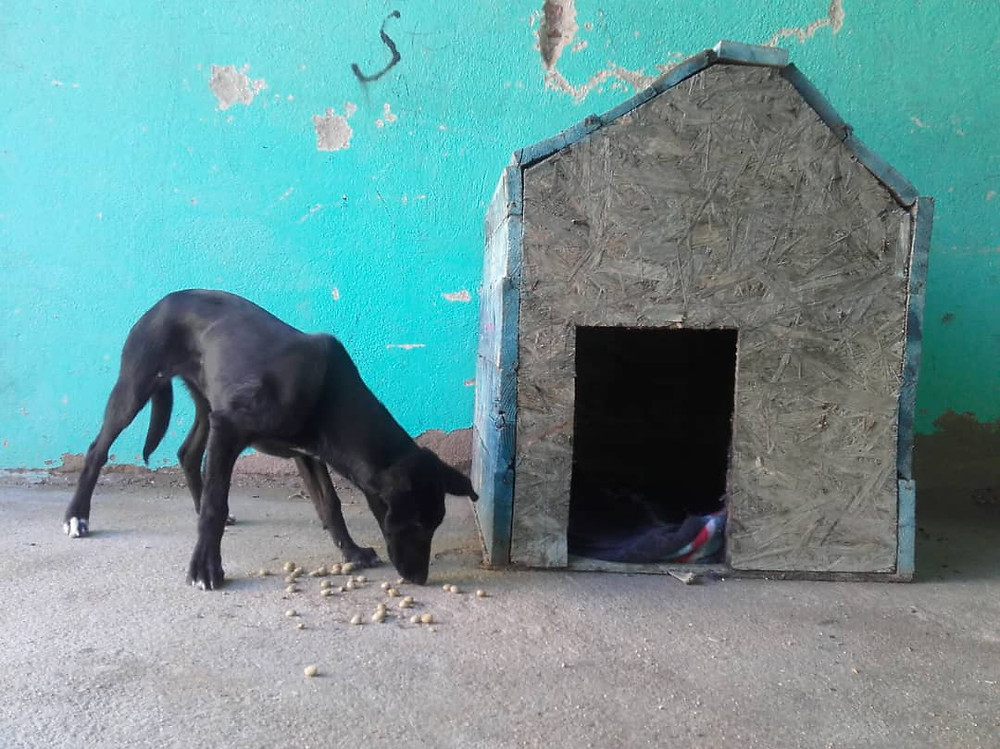 Lady-Blacky in front of her AKI-ondated dog house