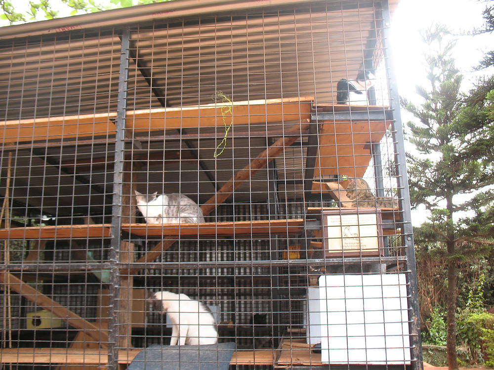 The cattery offers hiding places, toys, & scratching posts