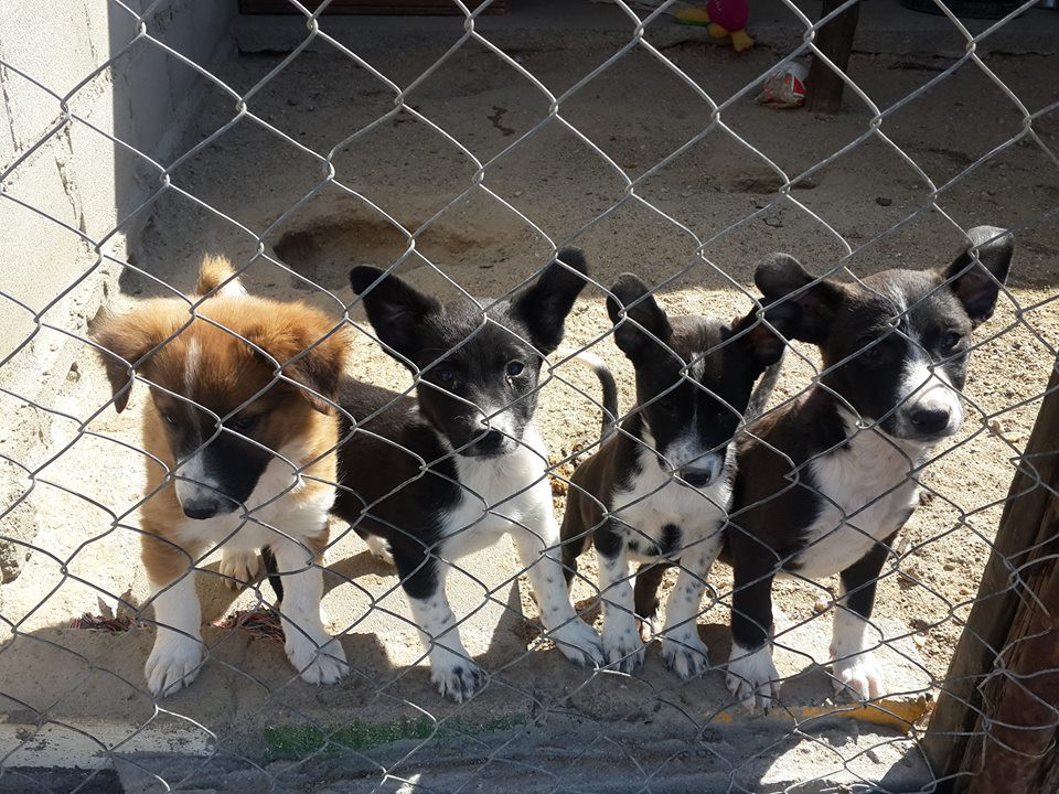 4 of 8 puppies that were at the Luderitz SPCA