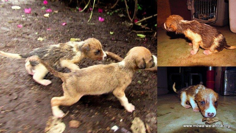 Puppies Hugo and Eddie were brought to the shelter-their 6 littermates were doing well, but they needed more care