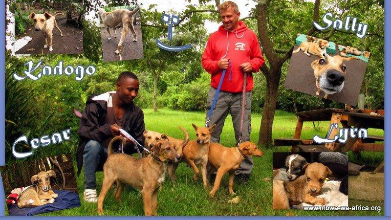 Mathias and friend go home with 4 MwA dogs!