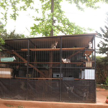 New roomy & sturdy cattery